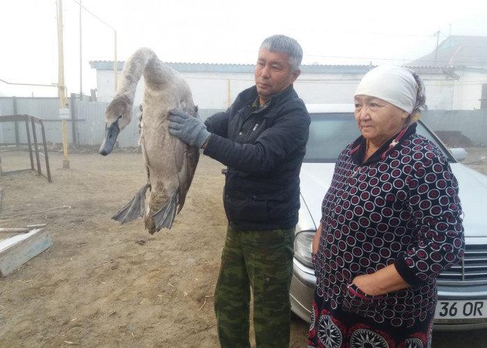 В Атырау спасли лебедя (фото), фото-1