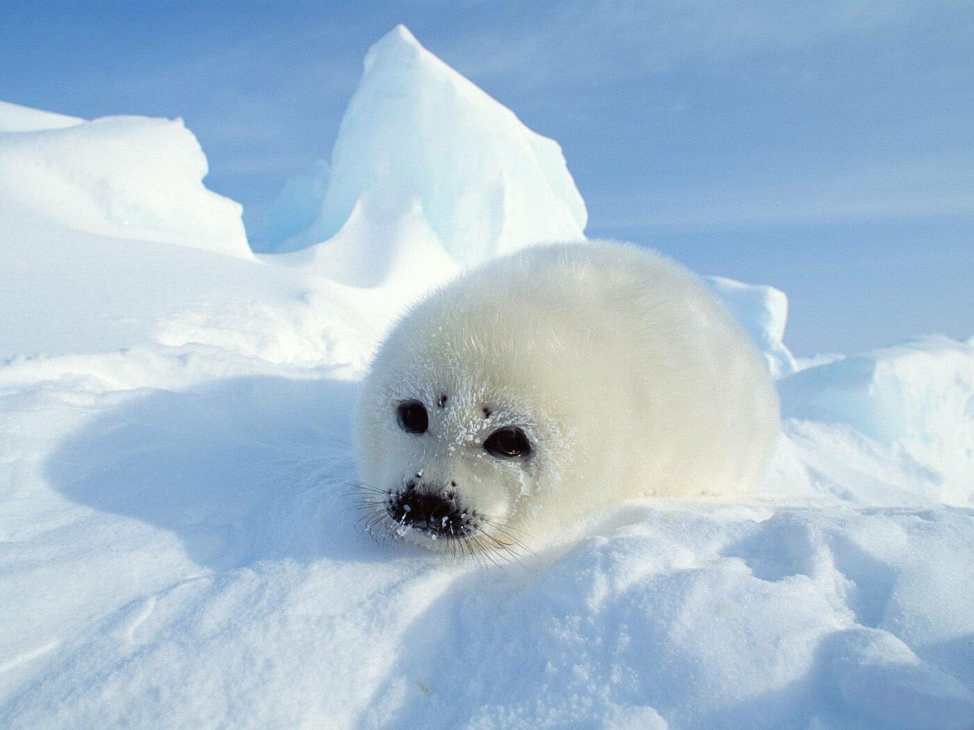 Казахстанские учёные смогут со спутника отследить пути миграции тюленей на Каспии, фото-2