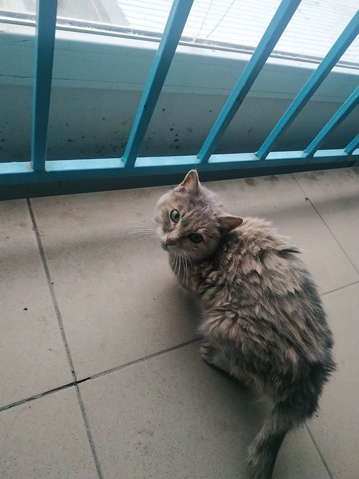 В Атырау заварили дверь квартиры-наркопритона, фото-5