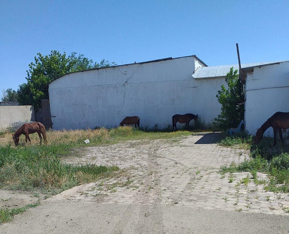 В Атырау ищут владельца пасущихся на аэропортовой трассе лошадей, фото-1, Акимат Атырау