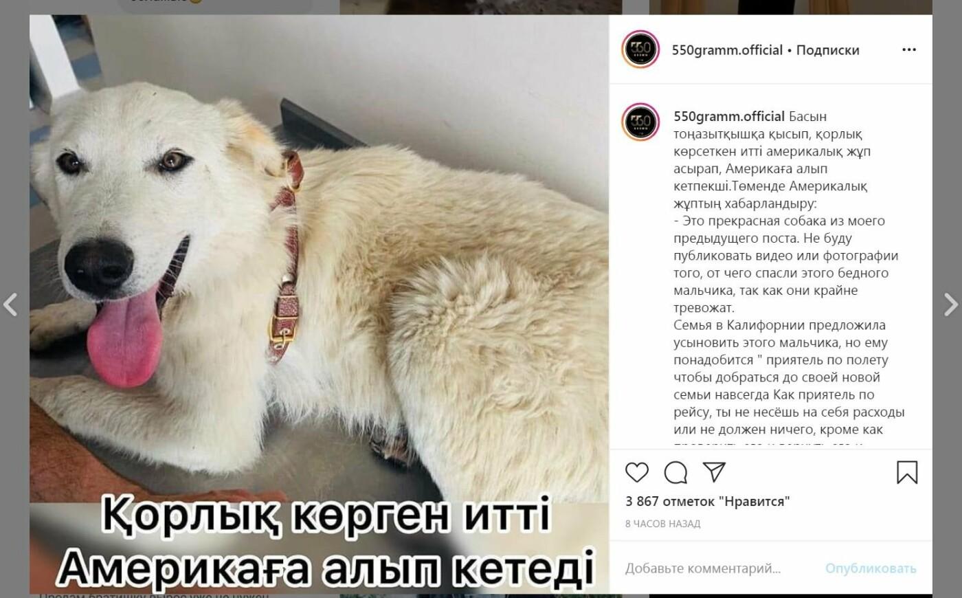 Жертву атырауского живодера - пса Lucky готова забрать семья из США, фото-1
