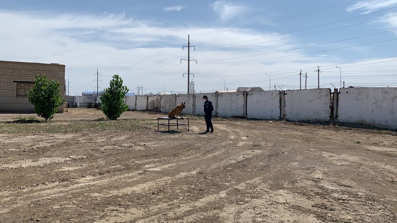 Тренировочные сборы служебных собак проводят в Атырауской области. Фото, фото-1