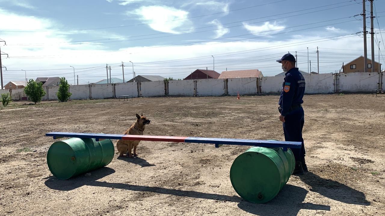 Тренировочные сборы служебных собак проводят в Атырауской области. Фото, фото-2