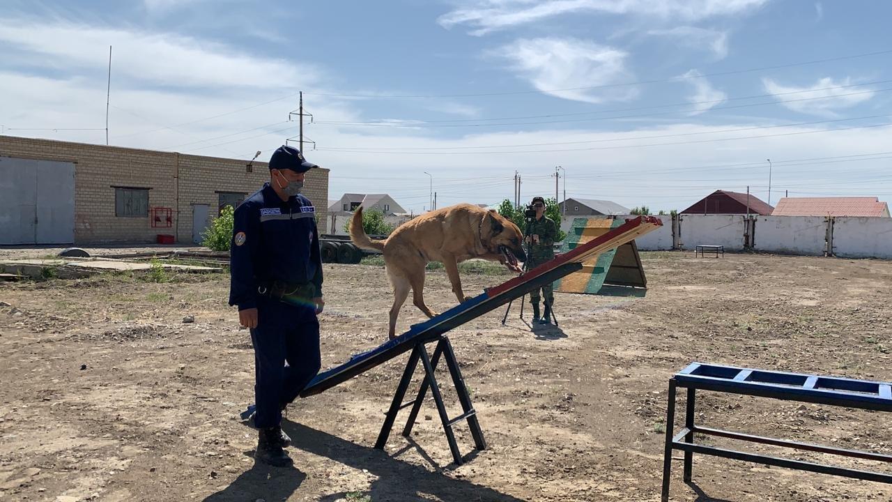Тренировочные сборы служебных собак проводят в Атырауской области. Фото, фото-3