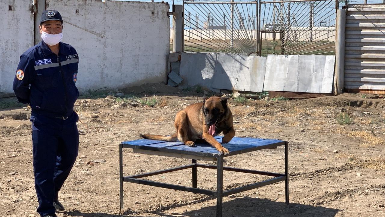 Тренировочные сборы служебных собак проводят в Атырауской области. Фото, фото-4