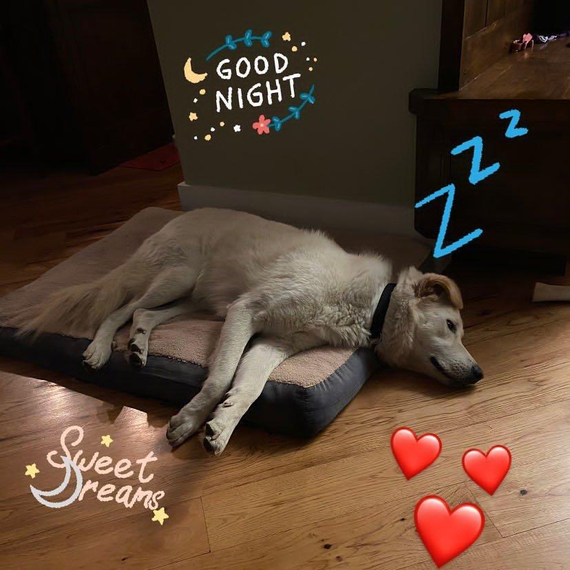 Привычные будни Лаки, oneluckydog_ca/Instagram